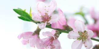 blossom bond investment